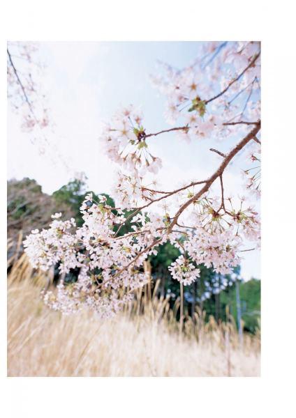 kagurazakamegumi1067